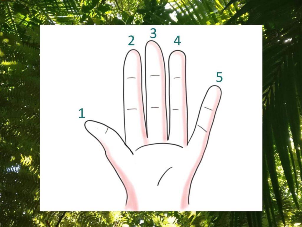 """Die Übung """"Eine Handvoll Gutes"""" soll bei der Achtsamkeit im Alltag helfen und den Fokus auf die positiven Dinge lenken. Auf dem Bild ist eine Hand zu sehen - visualisiert von www.achtsam-engagiert.de"""