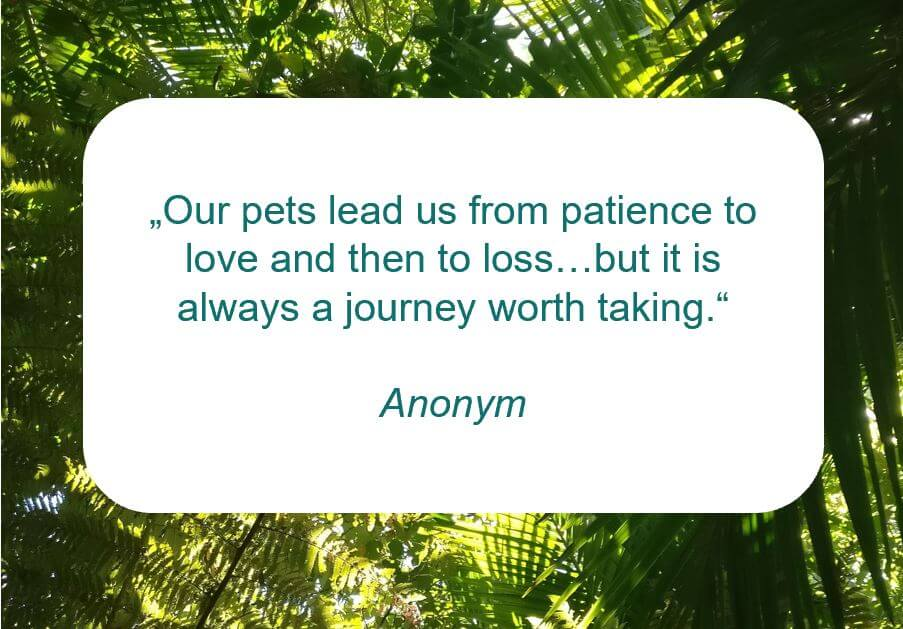 Zitat zum Thema Tiertrauer von Anonym auf www.achtsam-engagiert.de: Our pets lead us from patience to love and then to loss...but it is always a journey worth taking